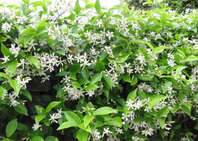 近百种户外植物名称大全_71