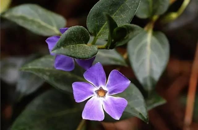 近百种户外植物名称大全_74