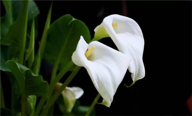 近百种户外植物名称大全_72