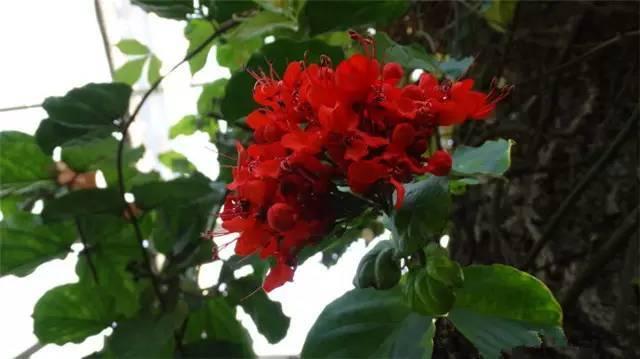 近百种户外植物名称大全_76