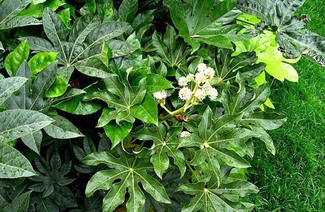 近百种户外植物名称大全_6