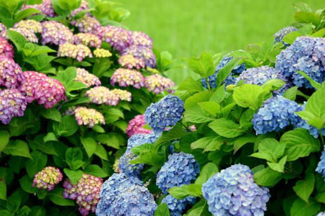 近百种户外植物名称大全_5