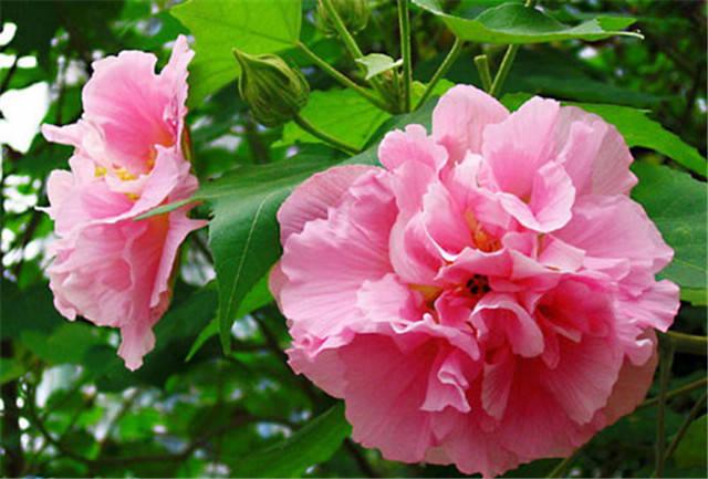 近百种户外植物名称大全_78