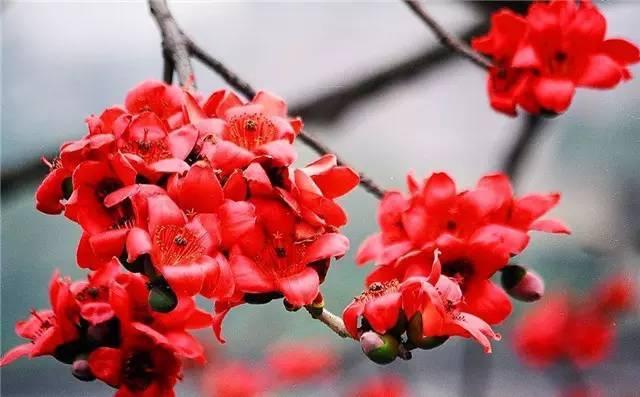 近百种户外植物名称大全_79