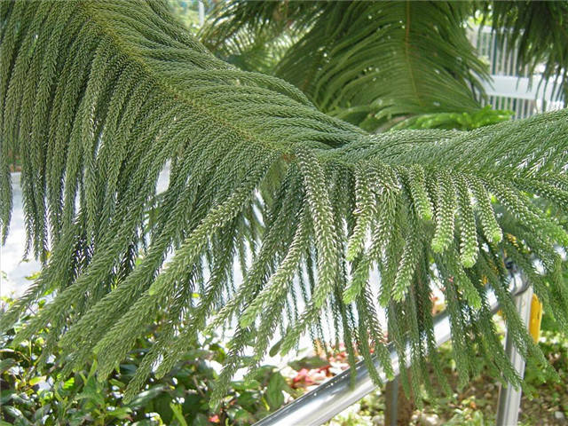 近百种户外植物名称大全_80