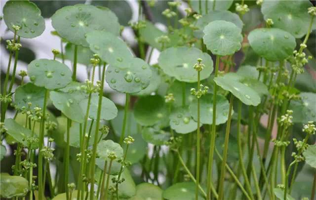 近百种户外植物名称大全_82