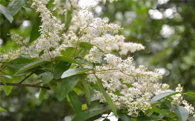 近百种户外植物名称大全_84