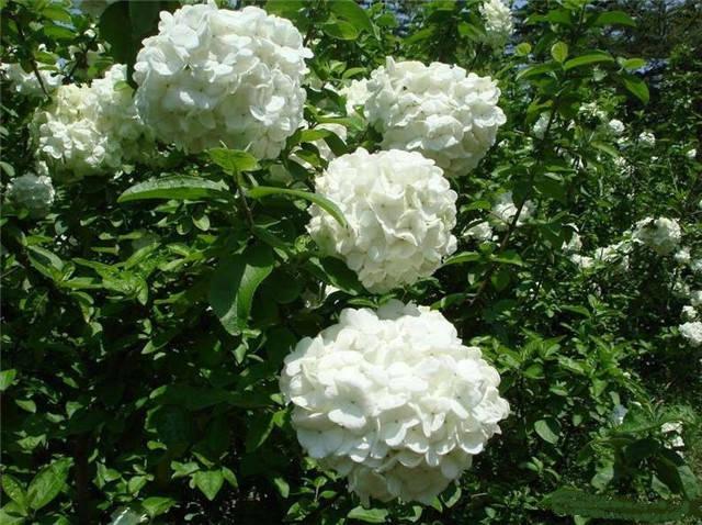 近百种户外植物名称大全_88
