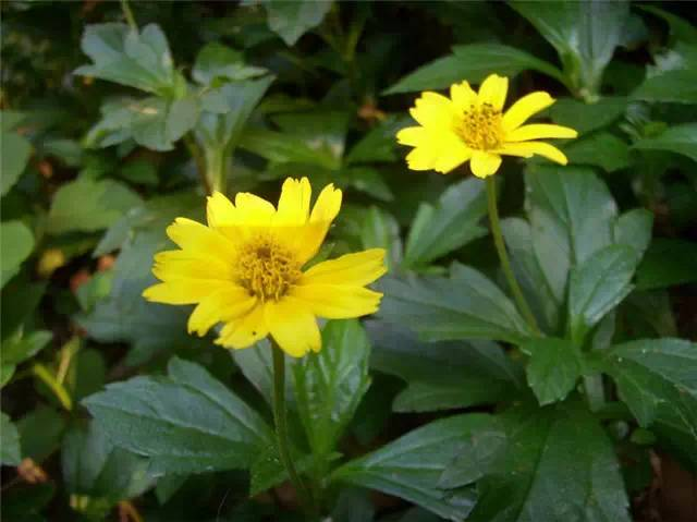 近百种户外植物名称大全_86