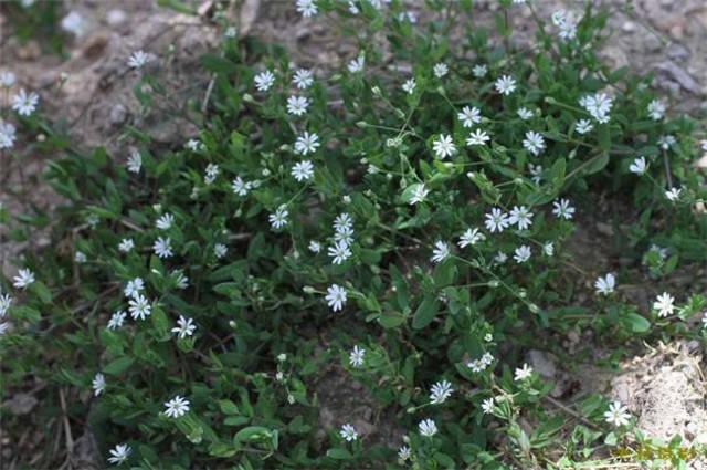 近百种户外植物名称大全_91
