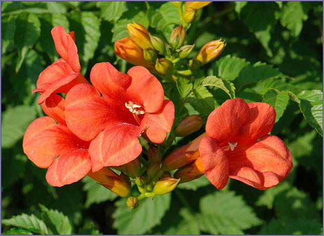 近百种户外植物名称大全_90