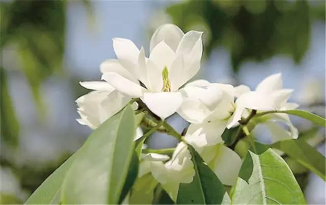 近百种户外植物名称大全_94