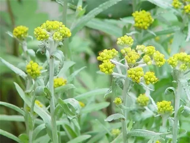 近百种户外植物名称大全_97