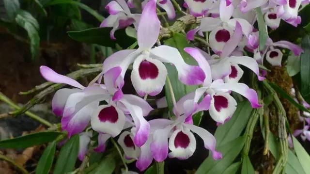 近百种户外植物名称大全_14