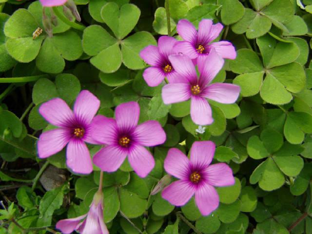 近百种户外植物名称大全_17