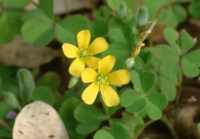 近百种户外植物名称大全_16