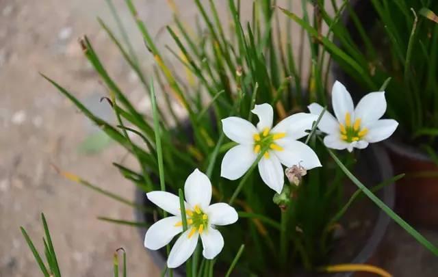 近百种户外植物名称大全_15
