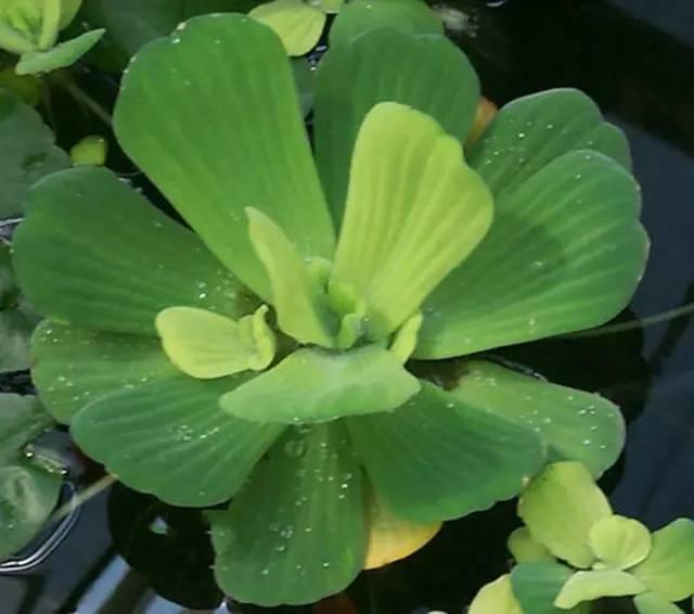 近百种户外植物名称大全_20