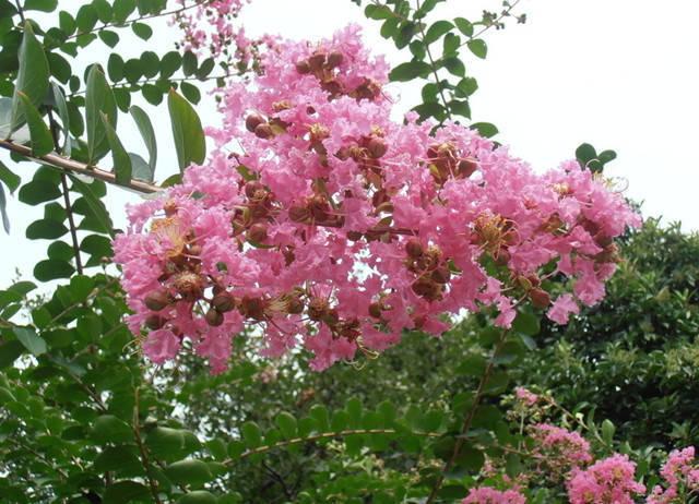 近百种户外植物名称大全_19