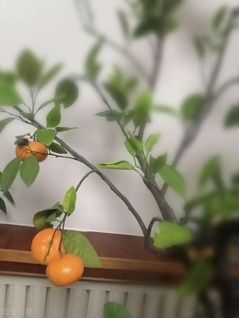 有院子就要安排上的果树,好看又美味_6