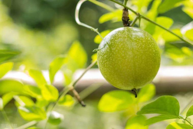 有院子就要安排上的果树,好看又美味_9