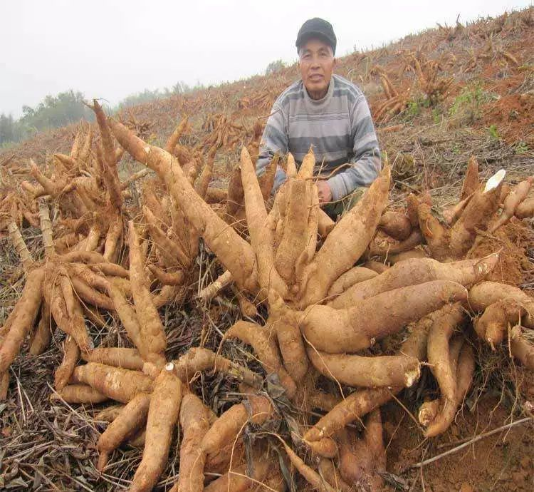 """原产巴西""""剧毒""""植物,引入中国90年后...._5"""