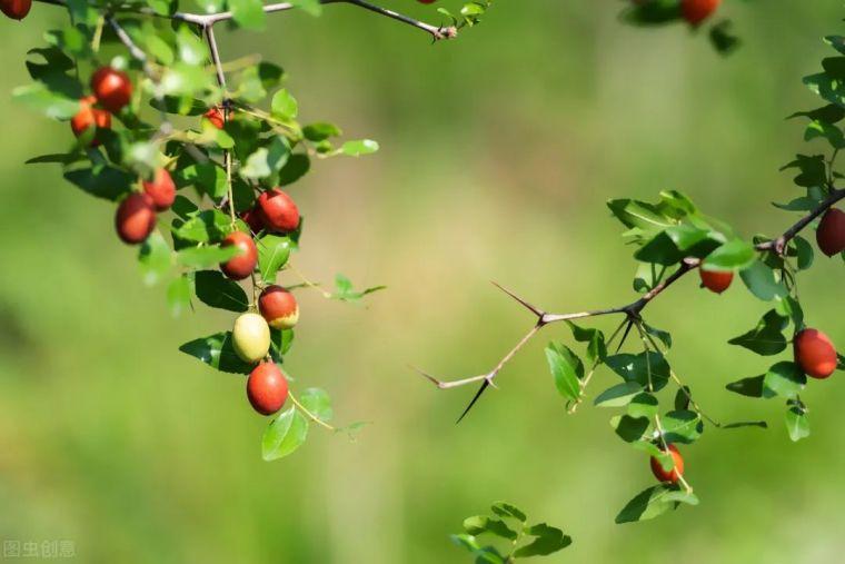 有院子就要安排上的果树,好看又美味_2