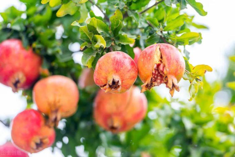 有院子就要安排上的果树,好看又美味_4