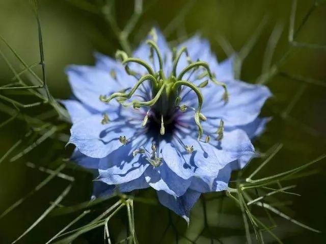 100种·花卉植物图谱_95