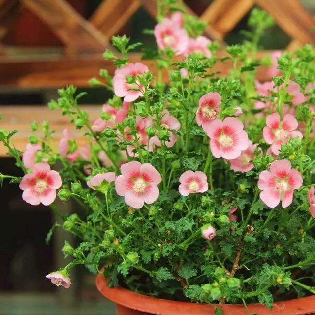 100种·花卉植物图谱_93