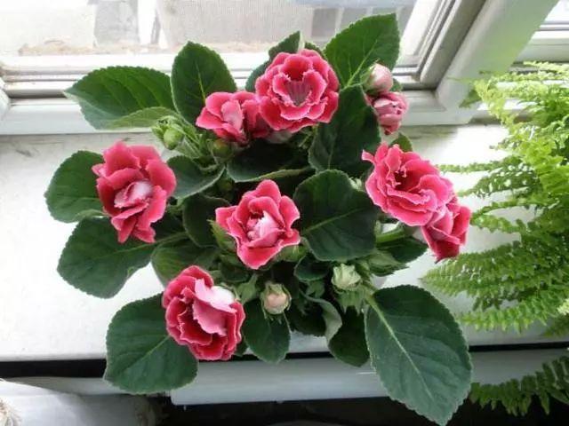 100种·花卉植物图谱_94