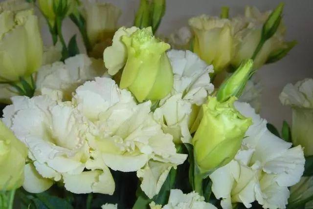 100种·花卉植物图谱_99