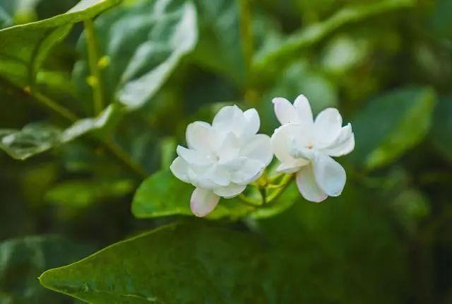 100种·花卉植物图谱_3