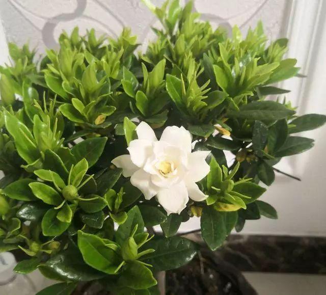 100种·花卉植物图谱_4