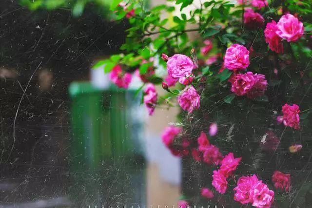 100种·花卉植物图谱_1