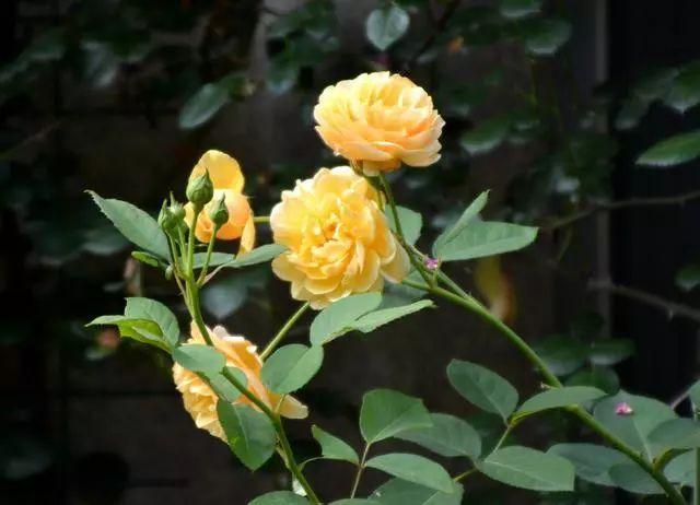 100种·花卉植物图谱_2