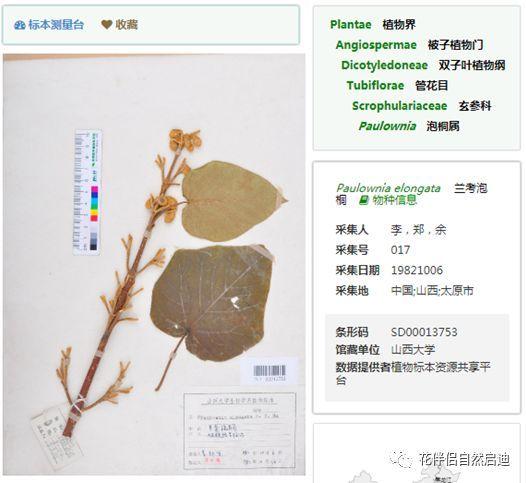 最全植物类查询专业网站丨植物类研究必备_11