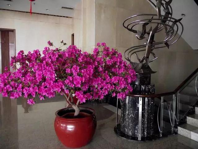 100种·花卉植物图谱_8