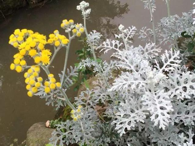 100种·花卉植物图谱_10