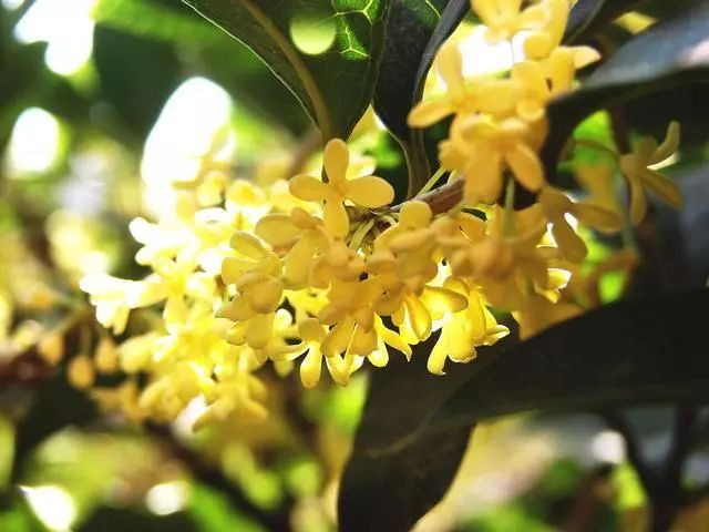 100种·花卉植物图谱_9