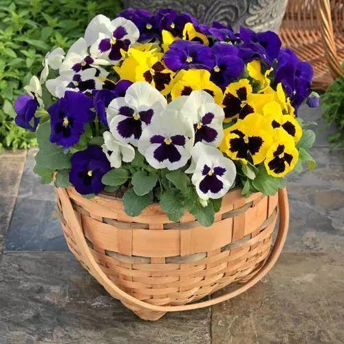 100种·花卉植物图谱_13