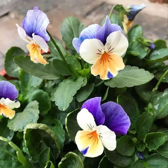 100种·花卉植物图谱_14
