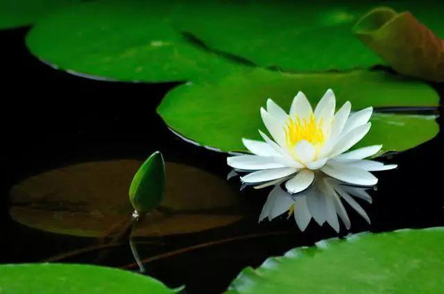 100种·花卉植物图谱_11