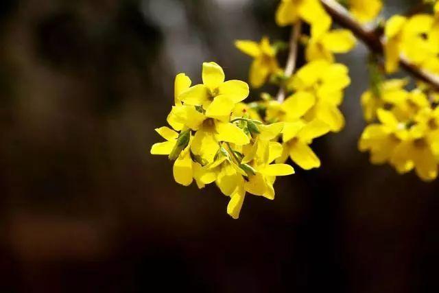 100种·花卉植物图谱_12