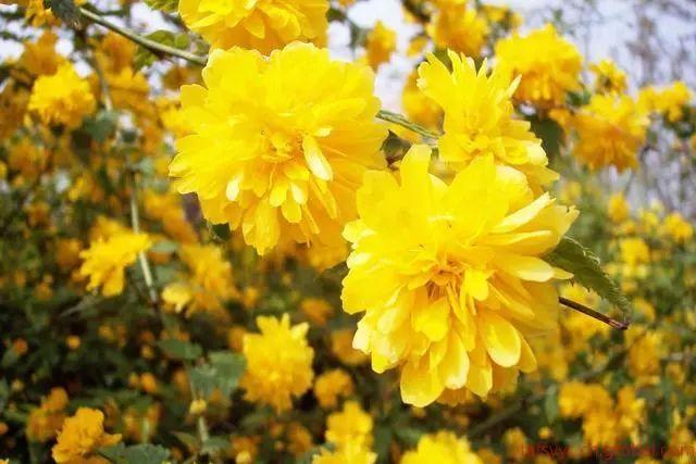 100种·花卉植物图谱_16