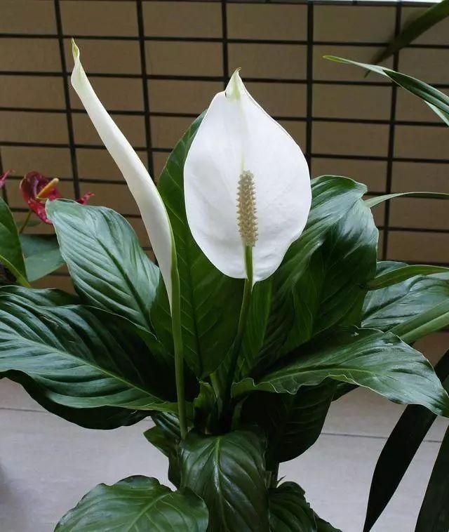 100种·花卉植物图谱_17