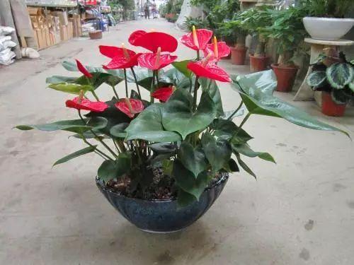100种·花卉植物图谱_18
