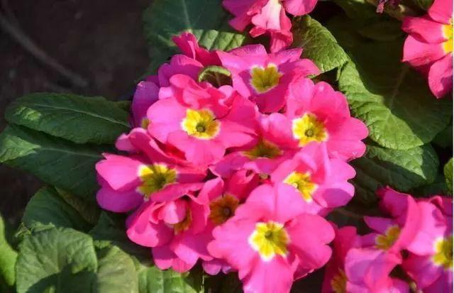 100种·花卉植物图谱_22