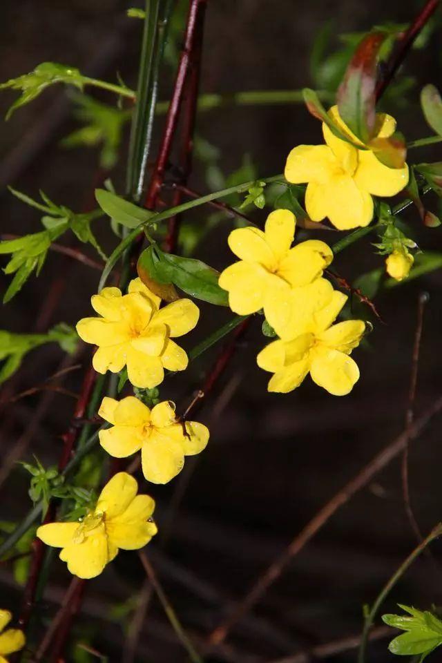 100种·花卉植物图谱_21