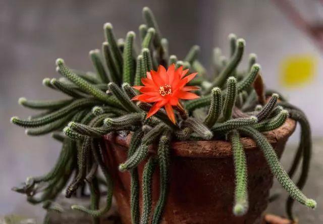 100种·花卉植物图谱_24